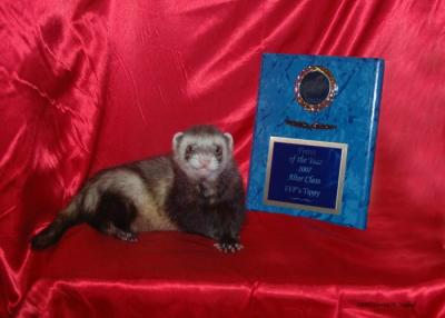 AFA 2007 Alter Ferret of the Year - FFP's Tippy