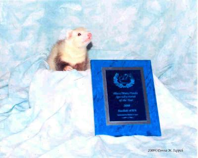 AFA 2008 Blaze/Panda/Mutt Specialty Ferret of the Year - Basilisk of RN