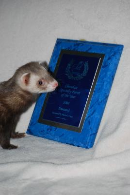 AFA 2008 Chocolate Specialty Ferret of the Year - Dweazel