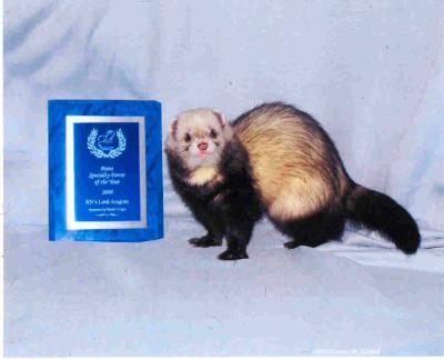 AFA 2008 Point Specialty Ferret of the Year - RN's Lord Aragorn