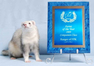 AFA 2009 Companion Ferret of the Year - Ranger of FPK
