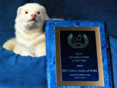 AFA 2009 Roan Specialty Ferret of the Year - SNF's Silver Surfer of FPWC