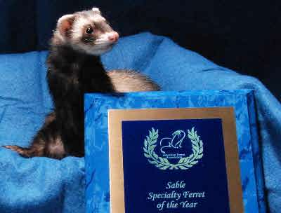AFA 2009 Sable Specialty Ferret of the Year - Bear's Bandit