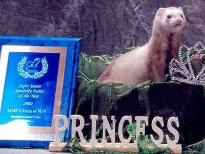 AFA 2009 Senior Specialty Ferret of the Year - MMF's Sienna of FOS