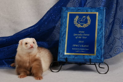 AFA 2010 Point Specialty Ferret of the Year - FPWC's Korbel