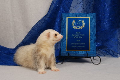 AFA 2010 Roan Specialty Ferret of the Year - Chingachook of FP