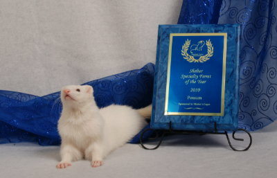 AFA 2010 Shelter Specialty Ferret of the Year - Possum
