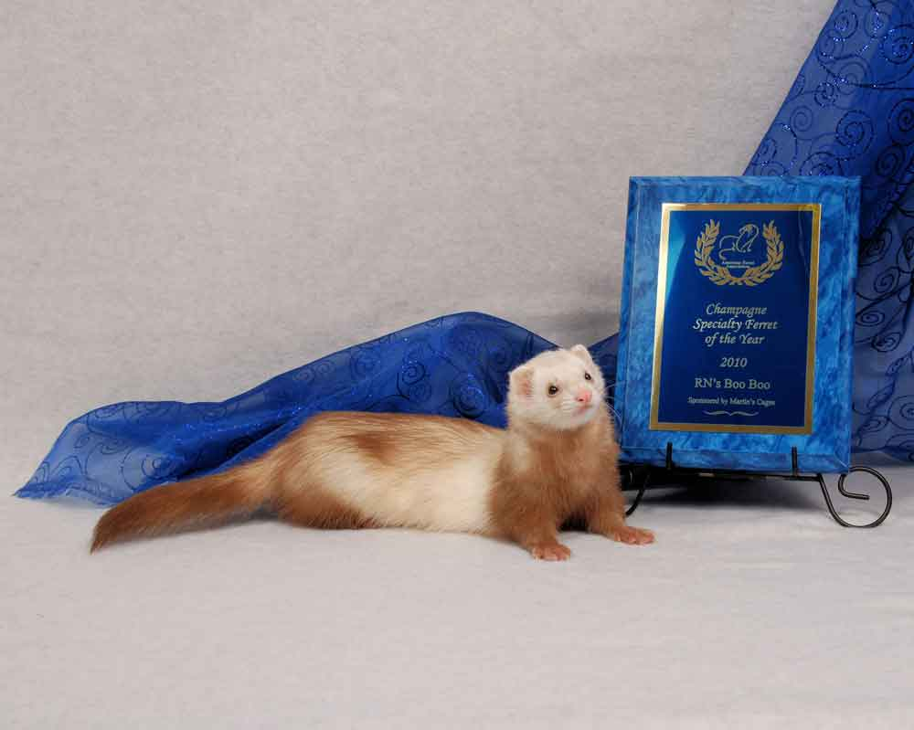 AFA 2010 Champagne Specialty Ferret of the Year - RN's Boo Boo