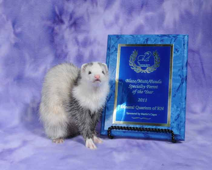AFA 2011 Blaze/Panda/Mutt Specialty Ferret of the Year - General Quarters of RN