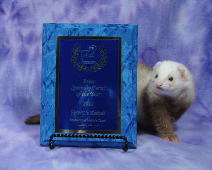 AFA 2011 Point Specialty Ferret of the Year - FPWC's Korbel