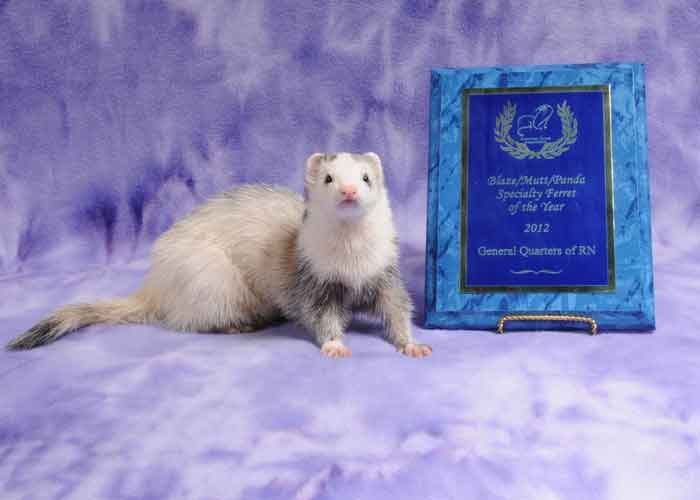 AFA 2012 Blaze/Panda/Mutt Specialty Ferret of the Year - General Quarters of RN