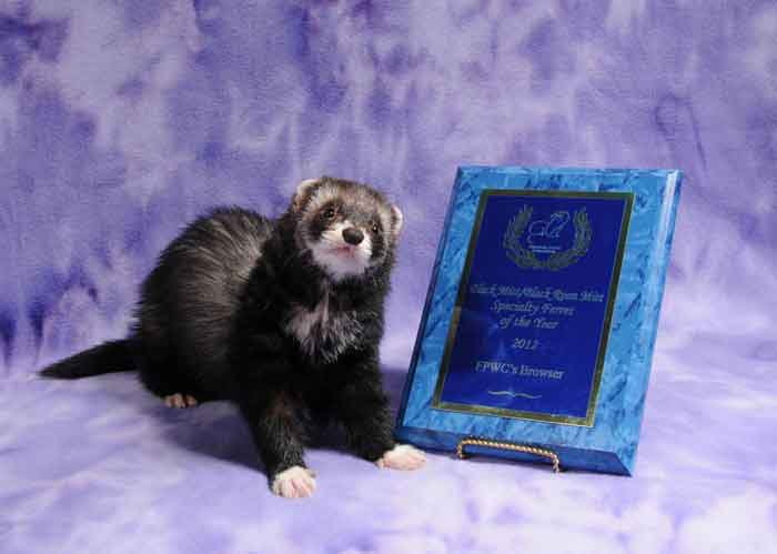 AFA 2012 Black Mitt/Black Roan Mitt Specialty Ferret of the Year - FPWC's Browser