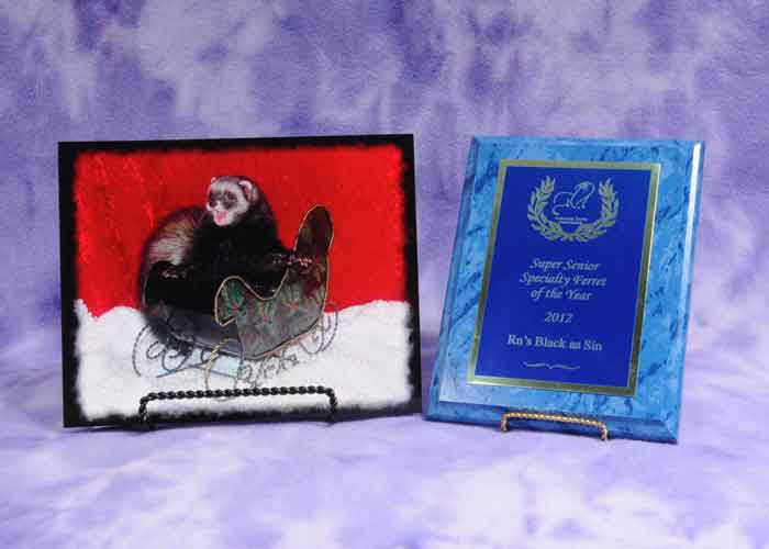 AFA 2010 Senior Specialty Ferret of the Year - RN's Black as Sin