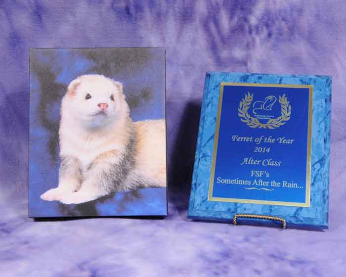 AFA 2014 Alter Ferret of the Year - FSF's Sometimes After the Rain…