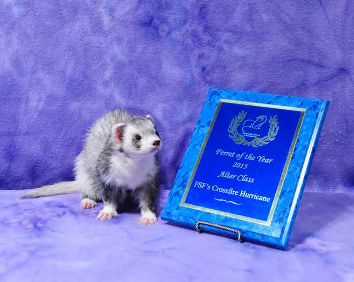 AFA 2015 Alter Ferret of the Year - FSF's Crossfire Hurricane