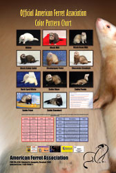 Ferret Color Chart Poster